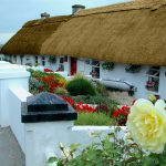 thatched-irish-cottages