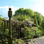Broken Decking and Wild Gardens