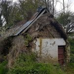 Thatch under a tin roof